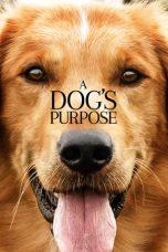 Nonton Film A Dog's Purpose (2017) Terbaru